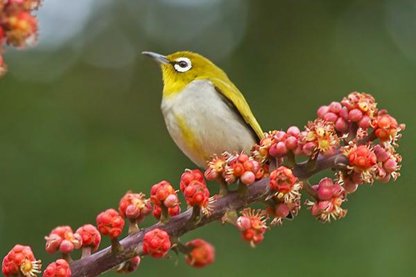 Bird27