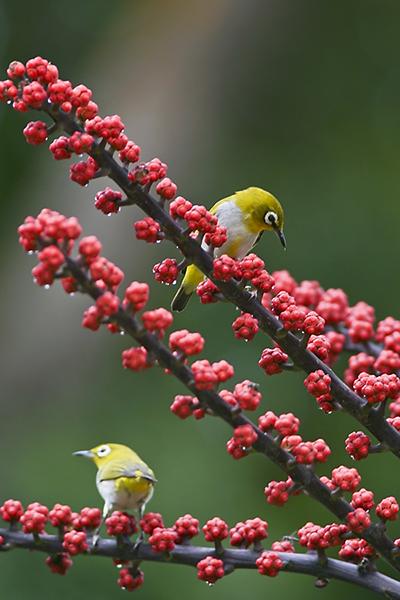 Bird29